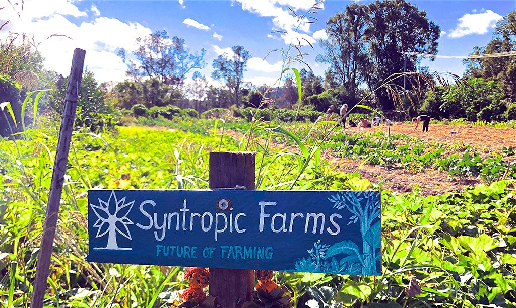 A new course on offer at Krishna Village will be one on Syntropic Farming