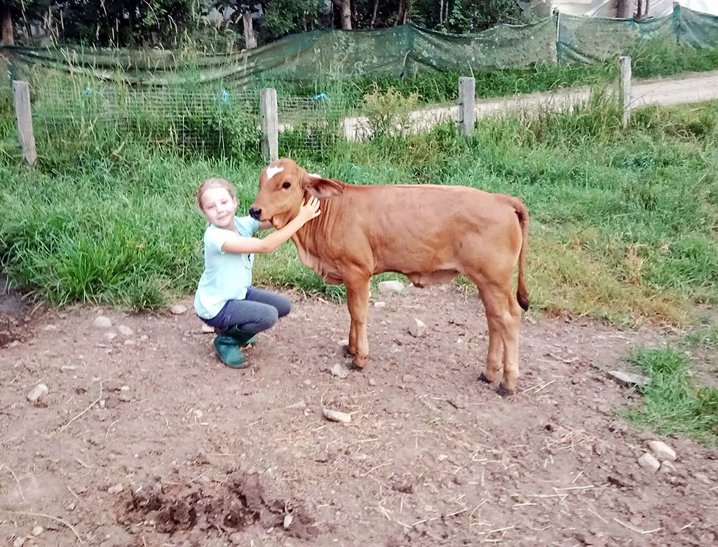 Young Annabella loves being with Radha Govardhanadhari's cows.